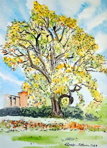 A watercolour painting of a tree in Bishop's Garden with yellow-coloured leaves. (c) 2019 by Eloise O'Hare.