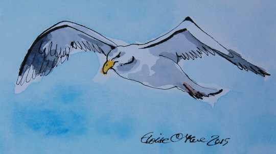 The second of four watercolour and ink pen paintings of a seagull. (c) by Eloise O'Hare.