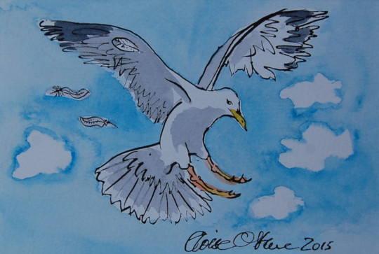 The third of four watercolour and ink pen paintings of a seagull. (c) by Eloise O'Hare.